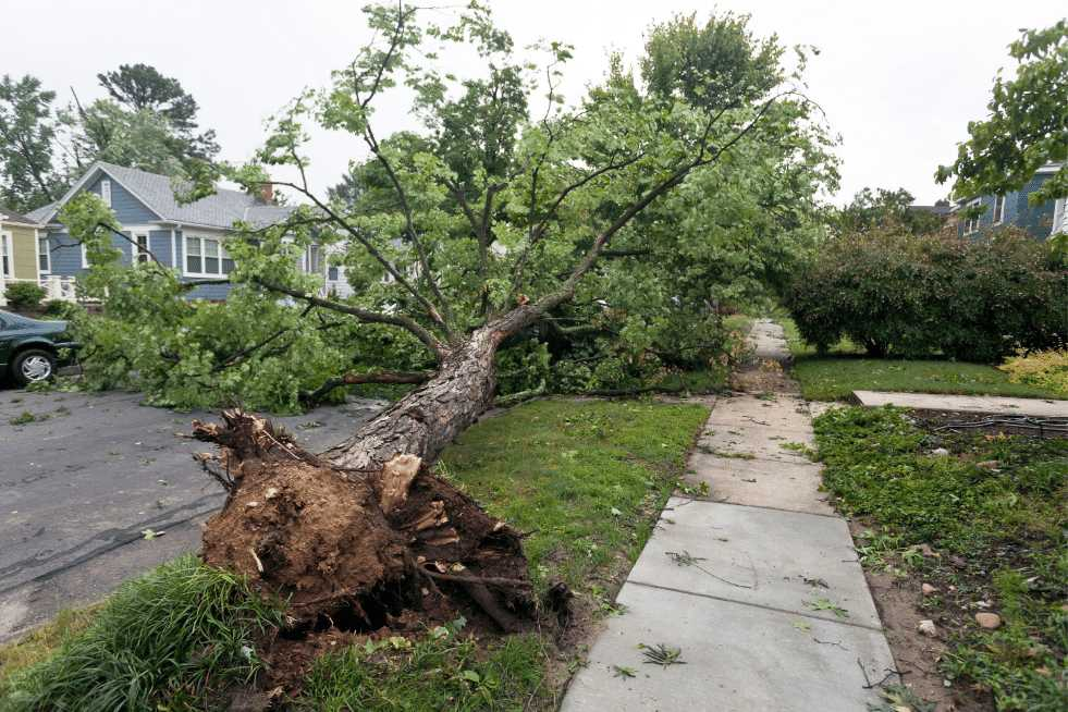 Tree Service Springfield IL - Emergency Tree Services