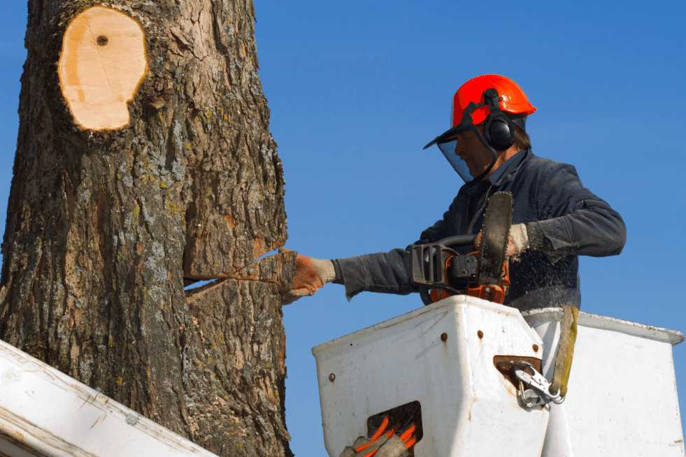 Tree Service Springfield IL - Tree removal