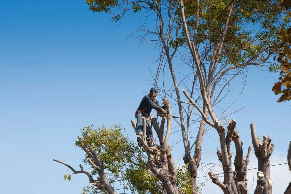 Tree Service Springfield IL - Tree trimming and cutting